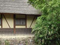 『箱根空木(ハコネウツギ)や楮(コウゾ)の花達~』 - 自然風の自然風だより