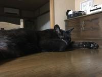 ねことテレビを観る - gin~tetsu~nosuke