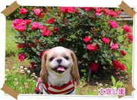 2019年5月12日大庭公園 - 週末は、愛犬モモと永吉とお出かけ!Kimi's Eye