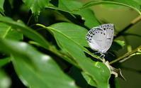 令和元年西風の季節その2 - 紀州里山の蝶たち