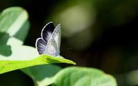 西風の季節その3 - 紀州里山の蝶たち