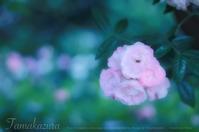 flowers - mur mur