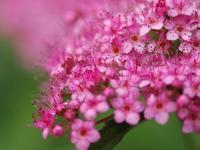 華やかな花です。 - 南都☆花模様