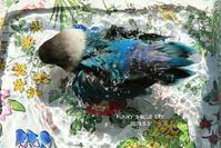 水浴びB.Bの記録(5月3日) - FUNKY'S BLUE SKY