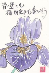 アヤメ「青い空にも梅雨空にも合いそう」 - ムッチャンの絵手紙日記