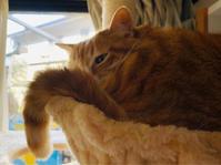 「ごめんなさい」の意味 - いぬ猫フェレット&人間