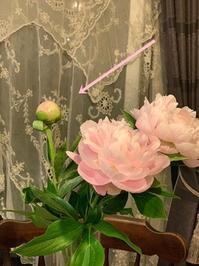 芍薬。固いつぼみをふんわり開かせる方法♪ - フレンチシックな家作り。Le petit chateau