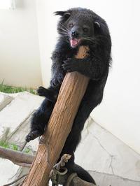 5月29日(水)高級の定義 - ほのぼの動物写真日記