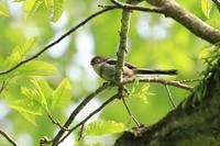 山麓で出会った鳥さんたち♪ - happy-cafe*vol.2