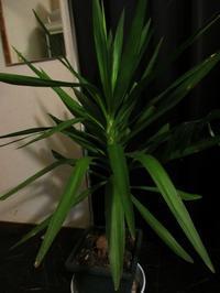 植物「自立しました」 - 孤影悄然
