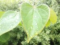 心にふる雨… - 侘助つれづれ