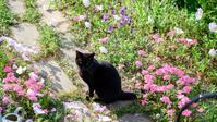 庭のクーちゃん - 猫と夕焼け
