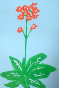 花鳥風月 - たなかきょおこ-旅する絵描きの絵日記/Kyoko Tanaka Illustrated Diary