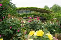 続・薔薇の楽園、フラワーパークへ - 季節の風を追いかけて
