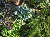 雨あがり - natural garden~ shueの庭いじりと日々の覚書き