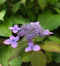 いけ花からつながる学び - 自然を見つめて自分と向き合う心の花