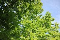 緑の季節EOS M3 - I LOVE Half Size Camera