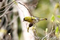 今季は・・会えませんでしたが・・在庫から^^ - ケンケン&ミントの鳥撮りLifeⅡ