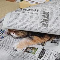 スマホであられー 新聞 ー - 何となく晴!blog2