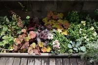 ちょっとこみあって来た裏花壇 - ヒバリのつぶやき