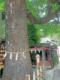 路地裏の御神木 - 風の香に誘われて 風景のふぉと缶