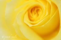5月のバラ - 感じるまま、気ままなblog
