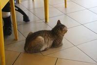プトラジャヤのレストランにいた猫 - 旅めぐり&花めぐり