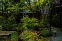 退蔵院に咲く花々 - 鏡花水月