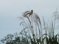 福島潟は初夏の雰囲気 - じょんのび