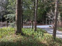 大町八王子神社授与所造園工事着工 - 三楽 3LUCK 造園設計・施工・管理 樹木樹勢診断・治療