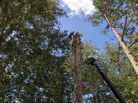 大町八王子神社授与所造園工事アプローチ着工 - 三楽 3LUCK 造園設計・施工・管理 樹木樹勢診断・治療
