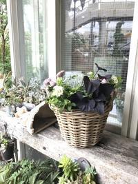 5月寄せ植え教室   最終日 - 小さな庭 2