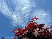 初夏の花々 - Photo Album