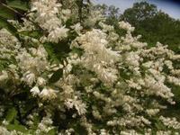 ちりめんは日本の絹織物 - 自然からの贈り物/草木染め