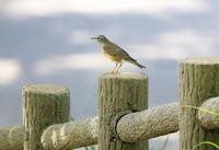 野鳥 - ゆるゆる野鳥観察日記