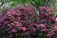 梅雨前の花たち - 旅のかほり