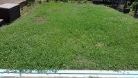 クラピア刈り今年初 - うちの庭の備忘録 green's garden
