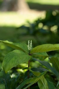 初夏の翠箱根彫刻の森-8- - 鴉の独りごと