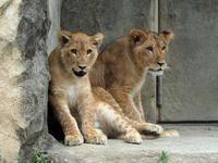 サンとなお一般公開開始 - 動物園放浪記