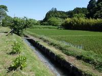 五月の晦日(みそか)、快晴。水に浮く植物。 - 千葉県いすみ環境と文化のさとセンター