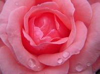 子宮下垂のお話反響がすごかった! - パームツリー越しにgood morning        アロマであなたの今に寄り添うブログ