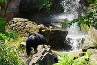 活発なメリーちゃん - 動物園に嵌り中