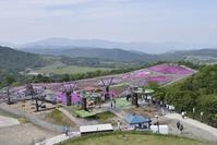 茶臼山高原の芝桜 - 尾張名所図会を巡る