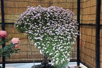 春のバラフェスタ☆神代植物公園 - さんじゃらっと☆blog2