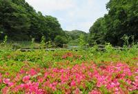 散歩2019.5.29②色々撮れた四季の森公園 - Gonta2019's Blog