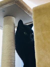 下僕なり - いぬ猫フェレット&人間