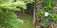 いつもの公園がジャングルになっていた - ひつじのつぶやき