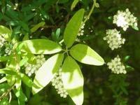 あけび・着る漢方 - 自然からの贈り物/草木染め