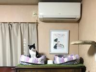 はちわれギャングどっちが先輩? - gin~tetsu~nosuke