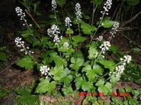 桑ノ木台湿原令和元年5月30日の様子 - 花立の花情報